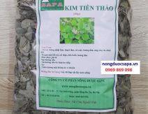 Kim tiền thảo