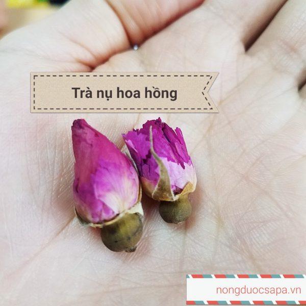 tra hoa hong 4