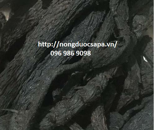Nhục thung dung được chọn lọc cẩn thận Củ to mập, mềm, nhiều dầu, ngoài có vảy mịn, mềm, màu đen.